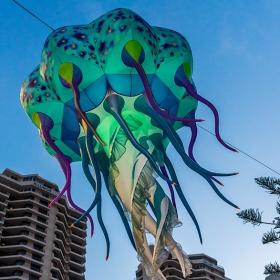 Jellyfish - dark matter
